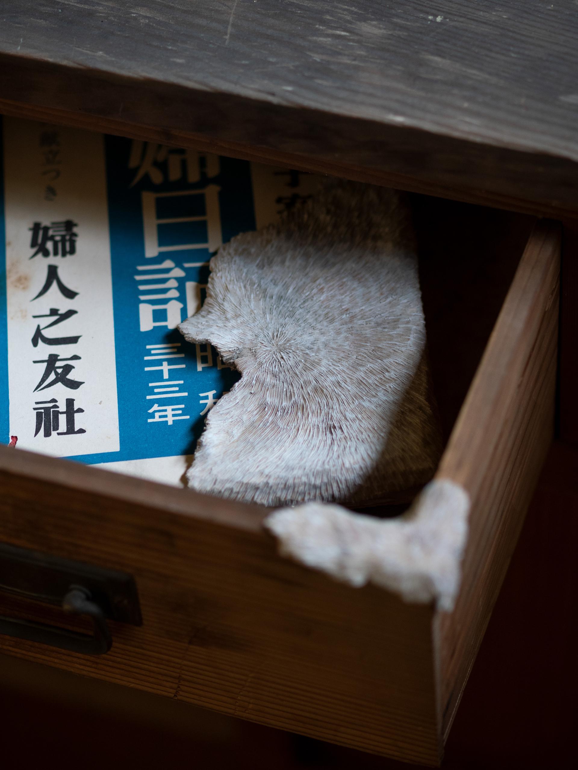 「刻の記憶 Arts and Memories」龍野アートプロジェクト 2016(兵庫県 たつの市)