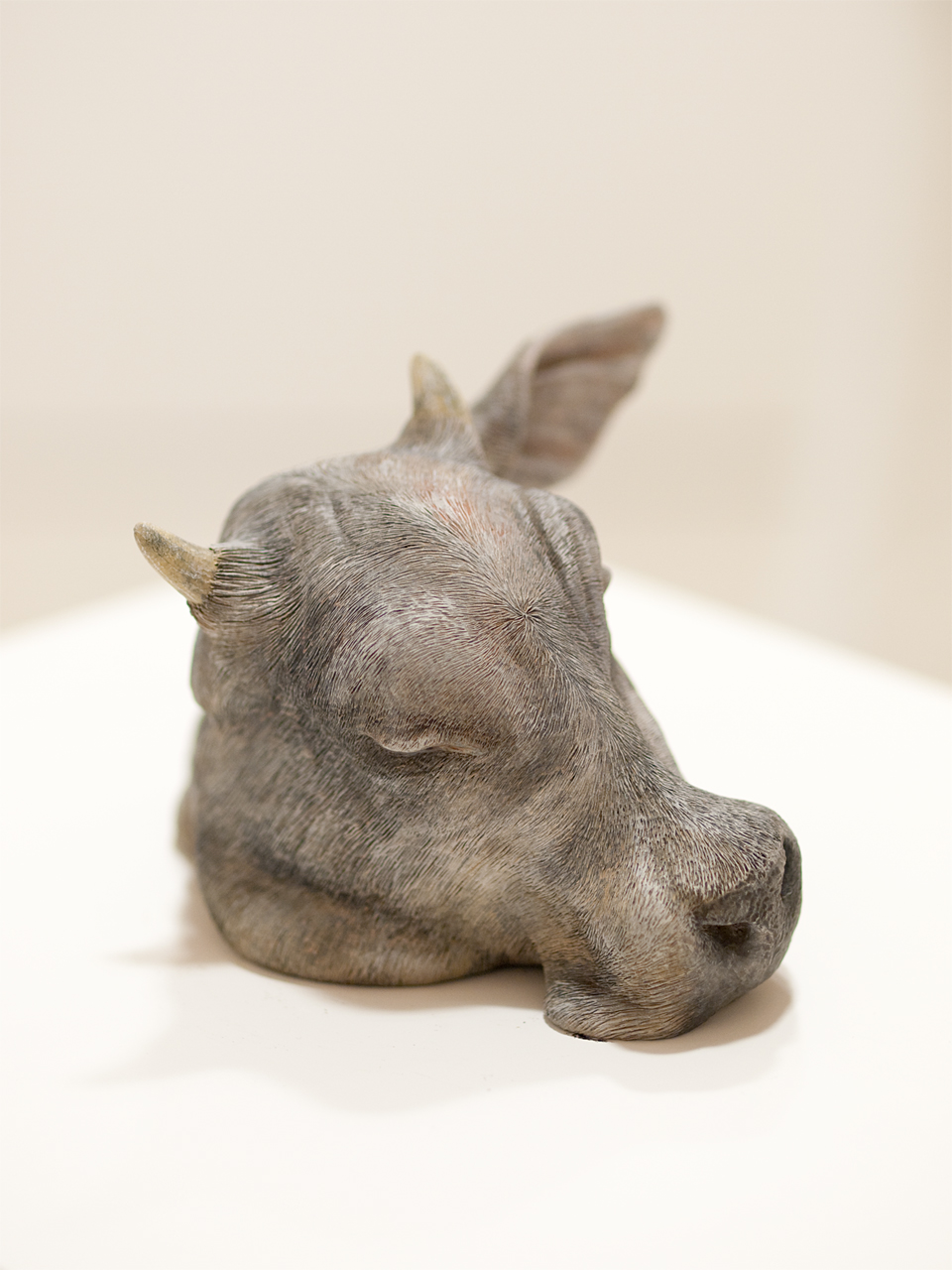 2010-2-cow-s-002