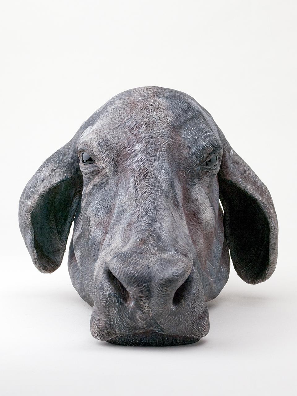 2011-11-cow-N-001